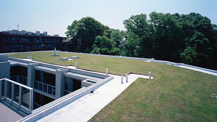 屋上緑化(2010年6月撮影)