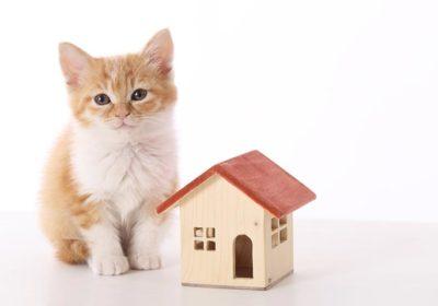 マンションでペットと一緒に暮らそう